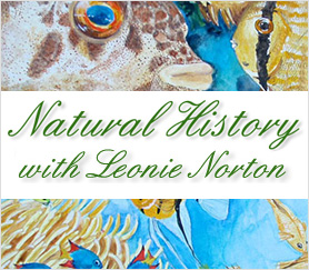 NaturalHistory-with-Leonie-Norton